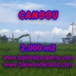 Stunning Property for sale in Bali land sale in Canggu Bali – TJCG140