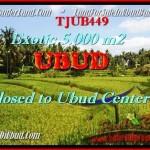 TJUB449 - JUAL TANAH MURAH DI UBUD - AFFORDABLE LAND FOR SALE IN BALI 1