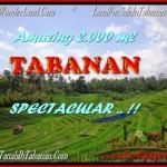 FOR SALE 2.000 m2 LAND IN TABANAN TJTB172