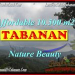 FOR SALE Magnificent 10,500 m2 LAND IN TABANAN BALI TJTB165