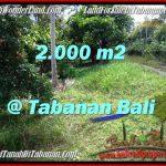 Magnificent PROPERTY Tabanan Selemadeg 2,000 m2 LAND FOR SALE TJTB206