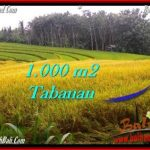 Exotic PROPERTY 1,000 m2 LAND IN Tabanan Selemadeg FOR SALE TJTB273