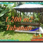 Exotic 1,200 m2 LAND FOR SALE IN TABANAN BALI TJTB294