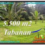 Magnificent 5,500 m2 LAND IN TABANAN BALI FOR SALE TJTB295